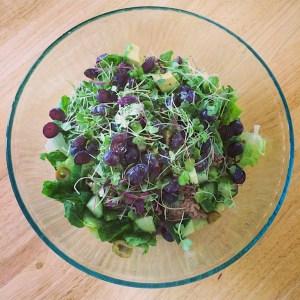 Romaine-Salad (1)