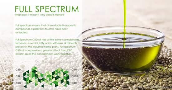 HBN – CBD Oils and Essential Oils | Katharine | KJensifyme